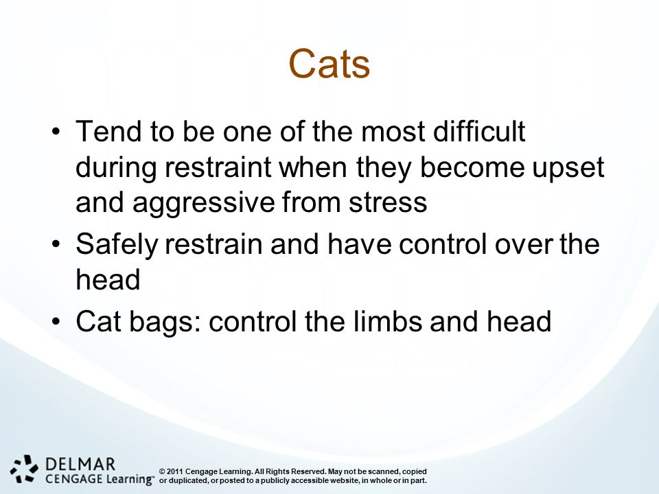 Cats Tend to be one of the most difficult during restraint when they become upset and aggressive from stress.