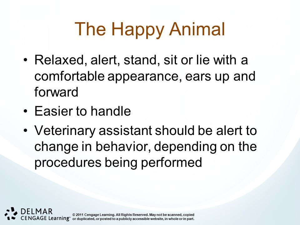The Happy Animal Relaxed, alert, stand, sit or lie with a comfortable appearance, ears up and forward.