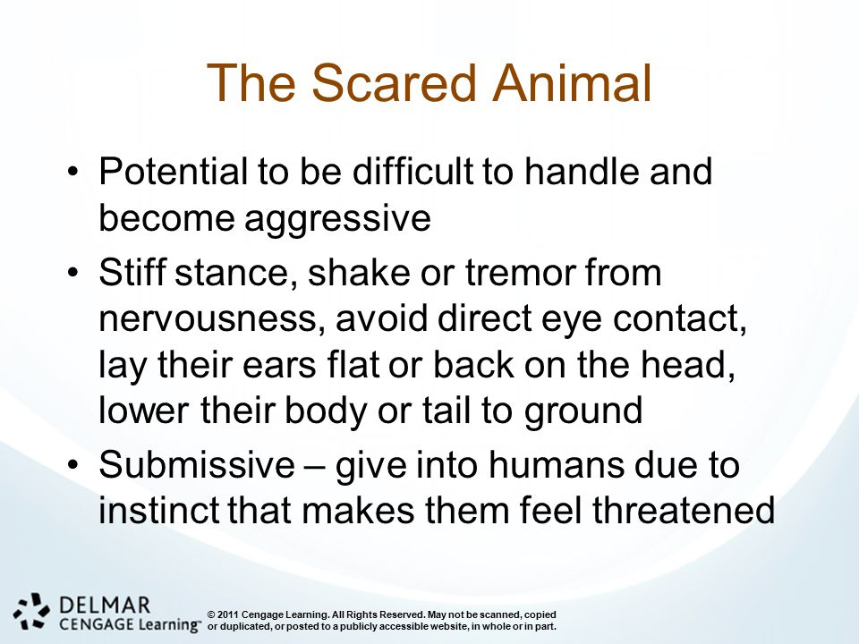 The Scared Animal Potential to be difficult to handle and become aggressive.
