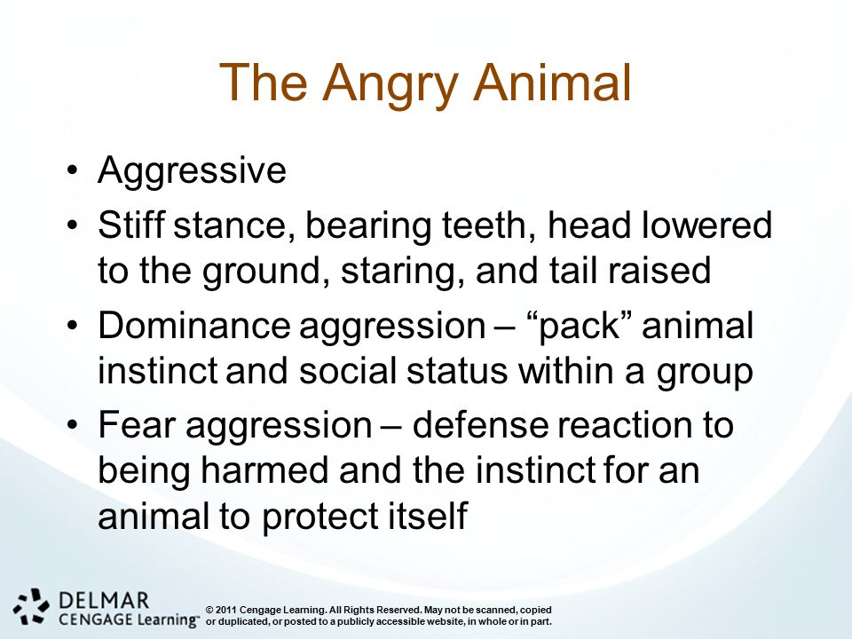 The Angry Animal Aggressive