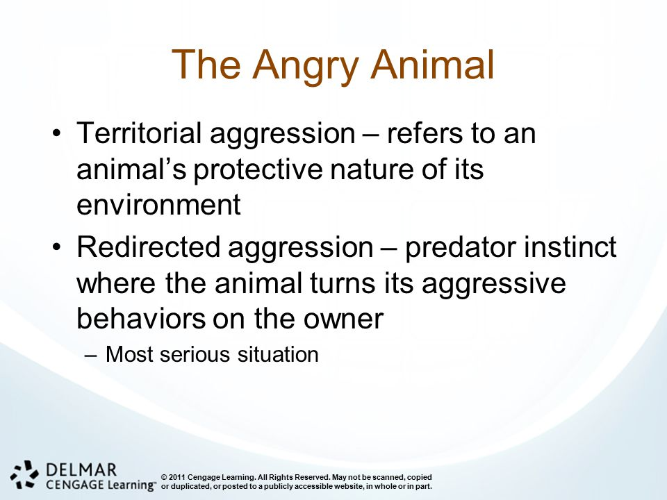 The Angry Animal Territorial aggression – refers to an animal's protective nature of its environment.