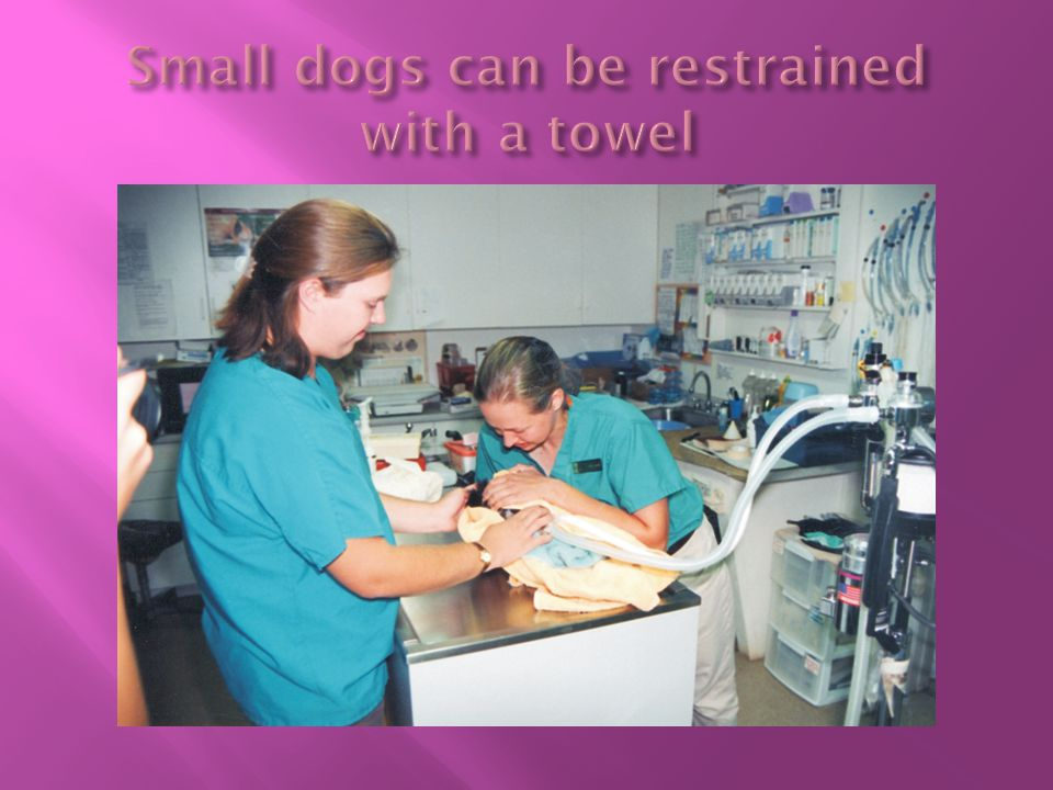 Small dogs can be restrained with a towel