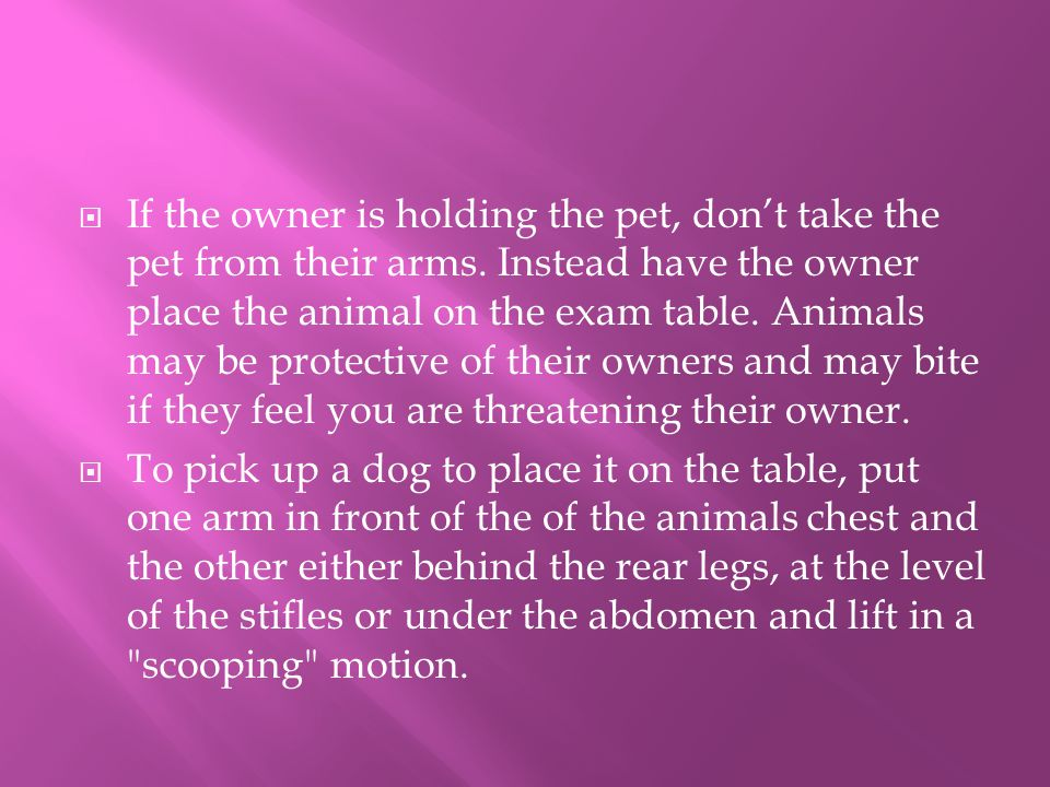 If the owner is holding the pet, don't take the pet from their arms