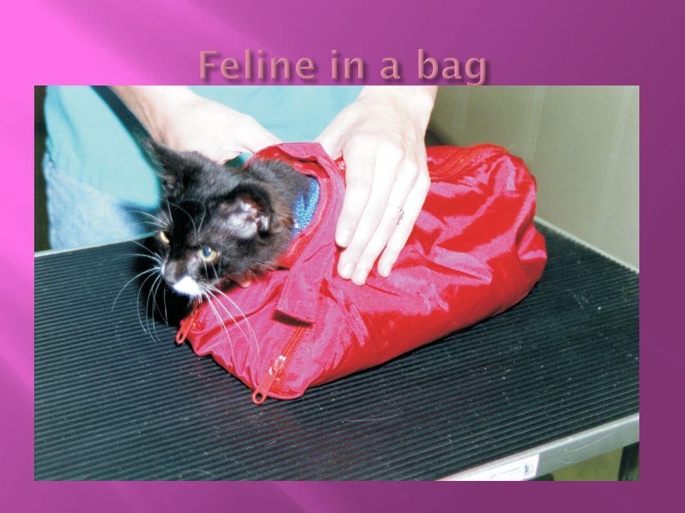 Feline in a bag