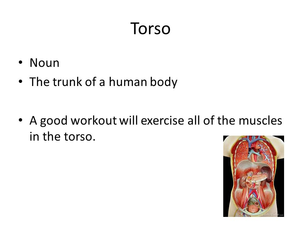 Torso Noun The trunk of a human body