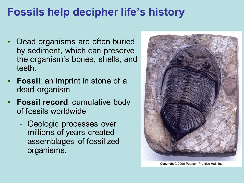 Fossils help decipher life's history