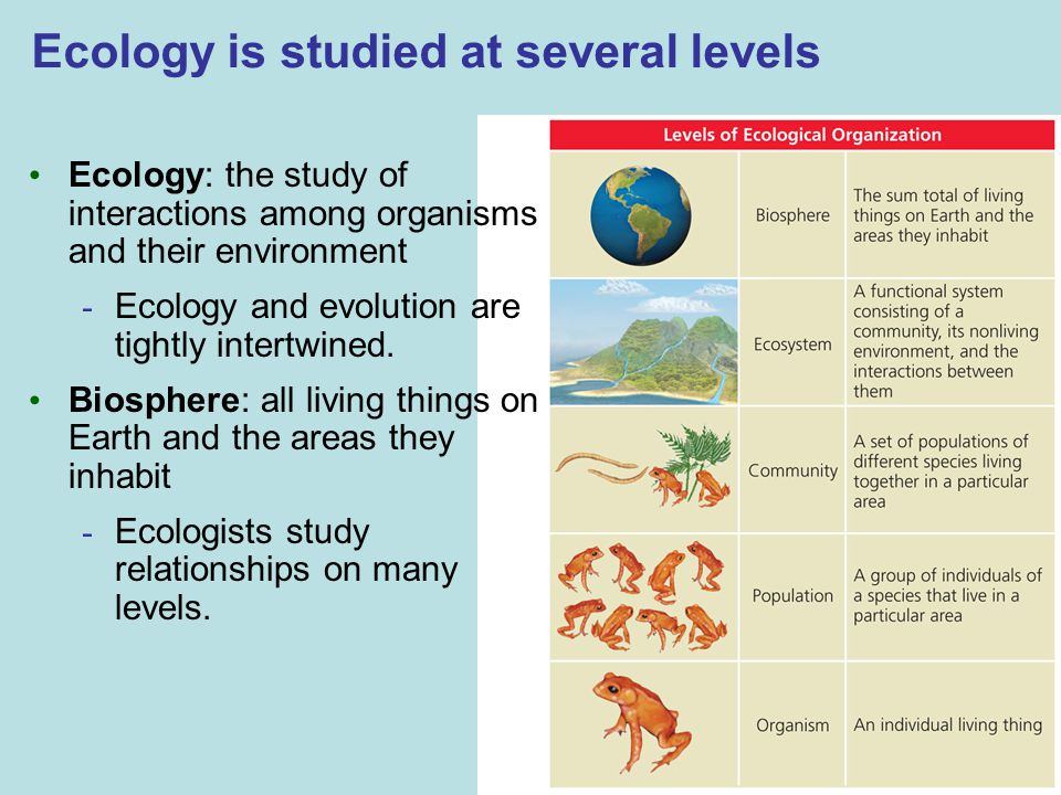 Ecology is studied at several levels