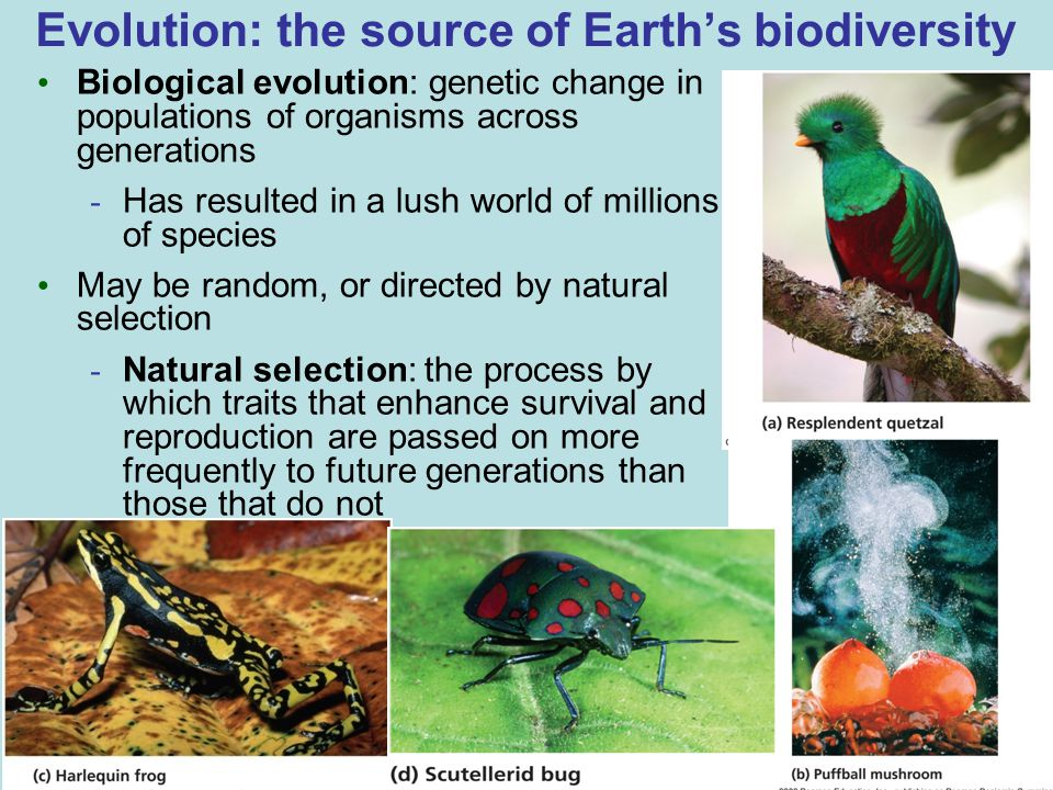 Evolution: the source of Earth's biodiversity