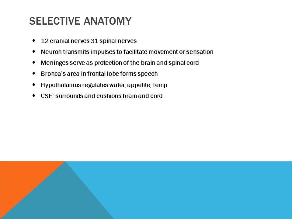 Selective Anatomy 12 cranial nerves 31 spinal nerves