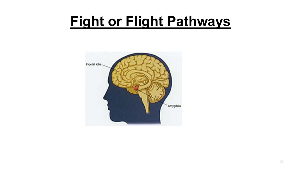 Fight or Flight Pathways