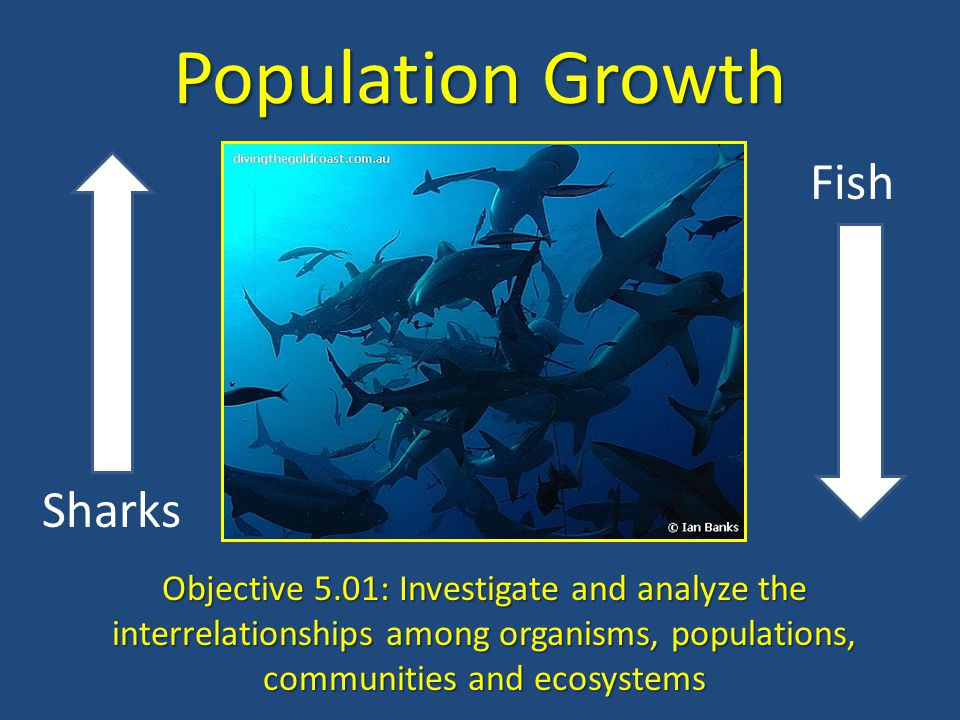 Population Growth Fish Sharks