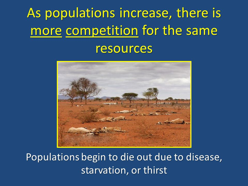 Populations begin to die out due to disease, starvation, or thirst