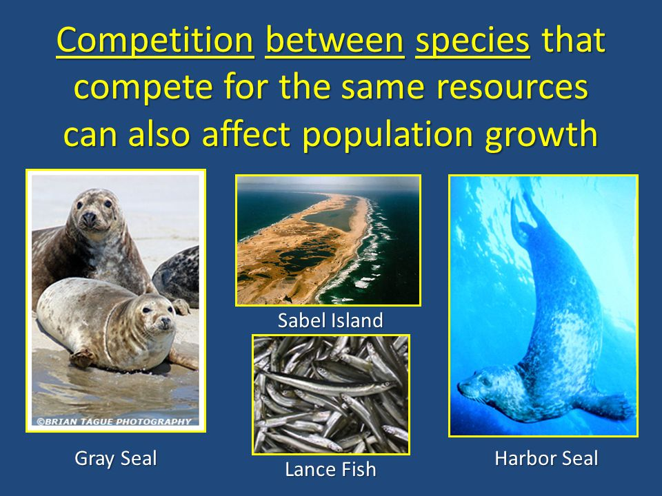 Competition between species that compete for the same resources can also affect population growth