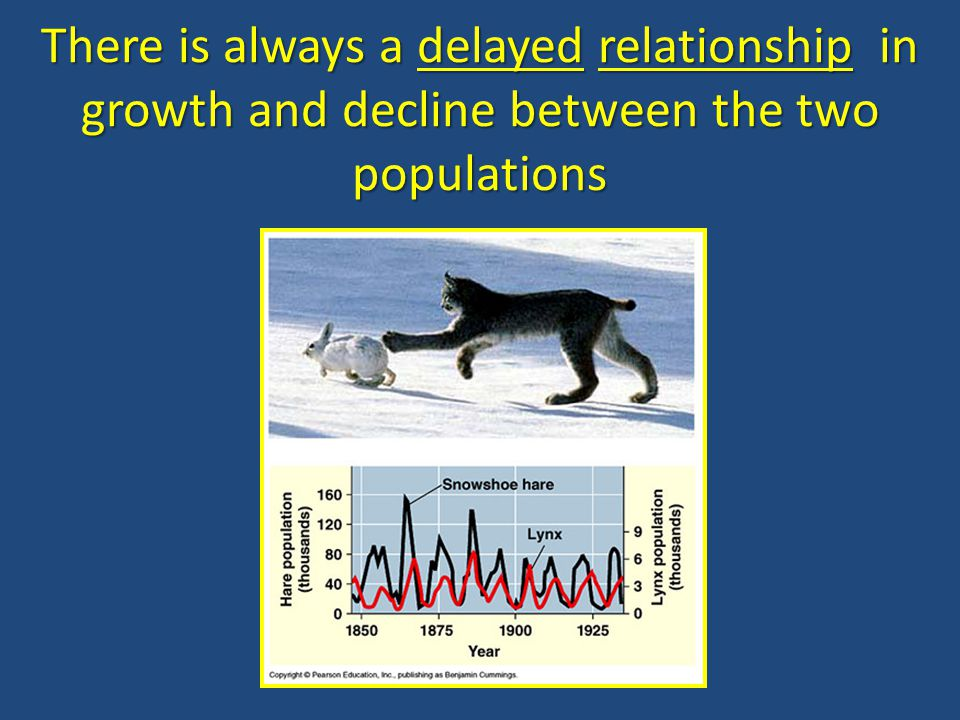There is always a delayed relationship in growth and decline between the two populations