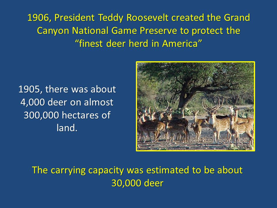 1905, there was about 4,000 deer on almost 300,000 hectares of land.