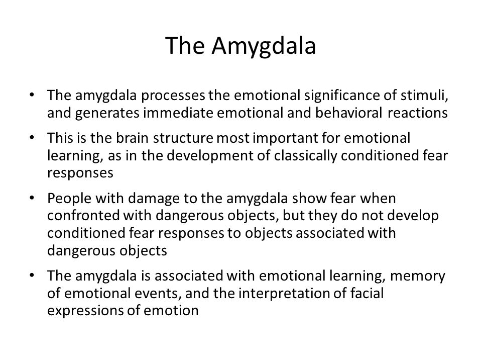 The Amygdala The amygdala processes the emotional significance of stimuli, and generates immediate emotional and behavioral reactions.