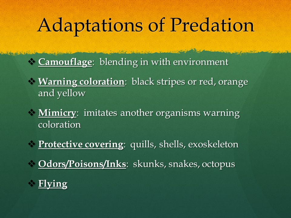 Adaptations of Predation