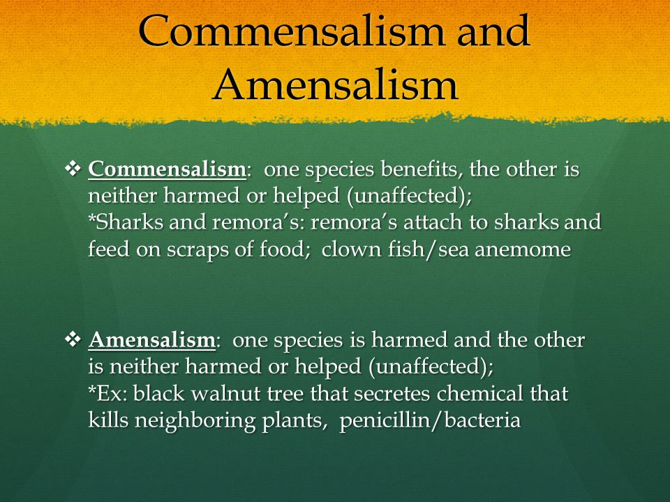 Commensalism and Amensalism