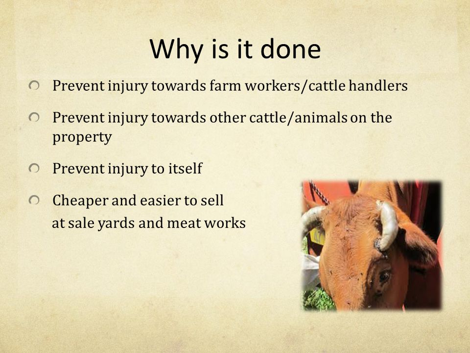 Why is it done Prevent injury towards farm workers/cattle handlers