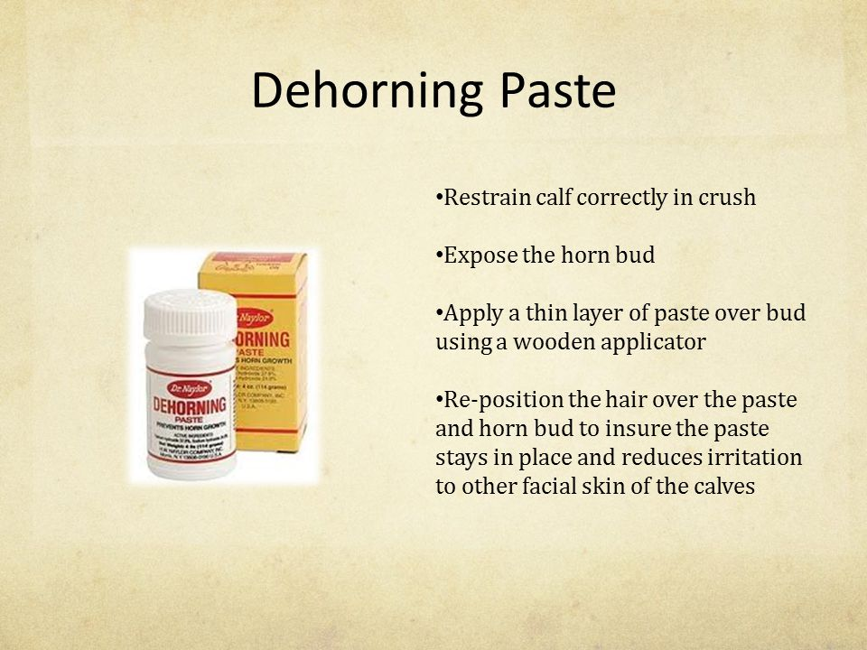 Dehorning Paste Restrain calf correctly in crush Expose the horn bud