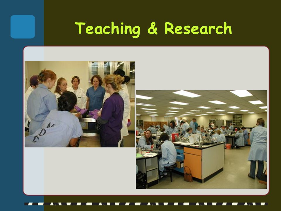 Teaching & Research