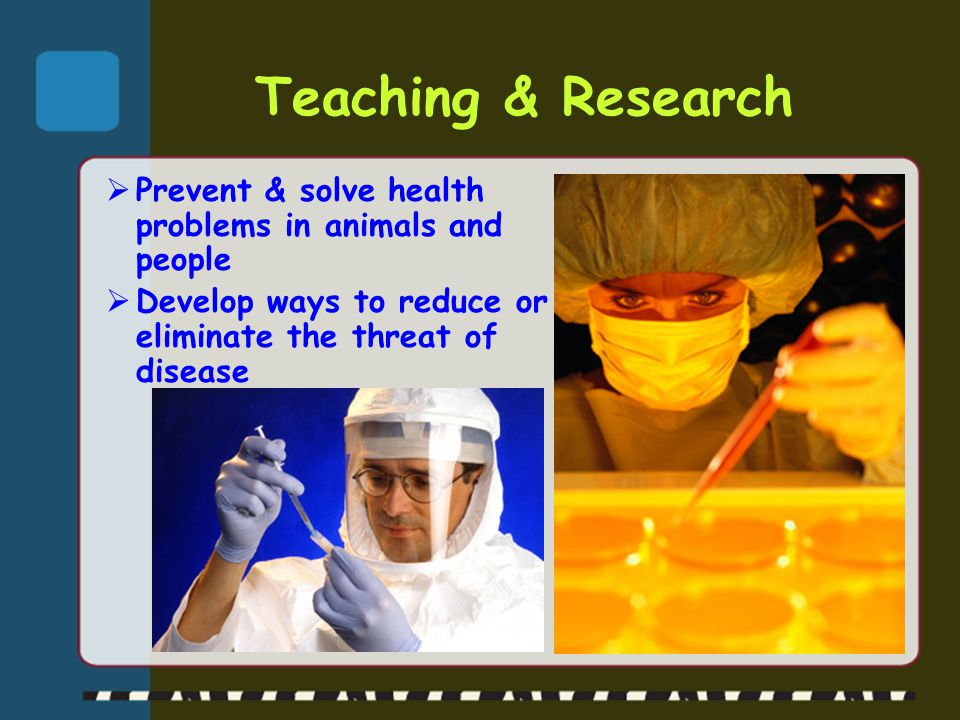 Teaching & Research Prevent & solve health problems in animals and people.