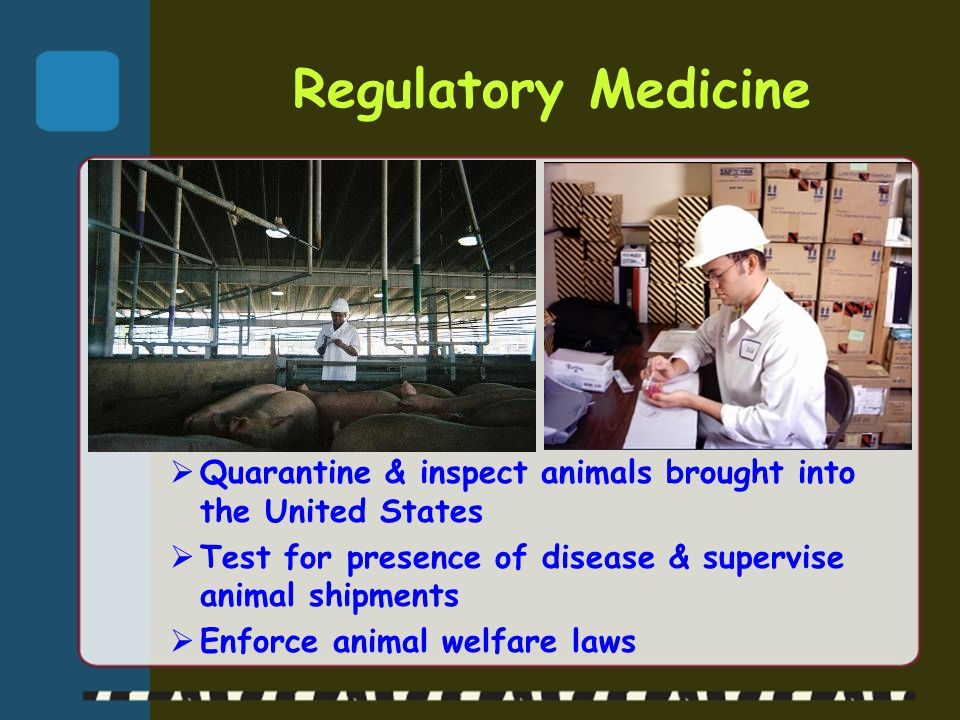 Regulatory Medicine Quarantine & inspect animals brought into the United States. Test for presence of disease & supervise animal shipments.