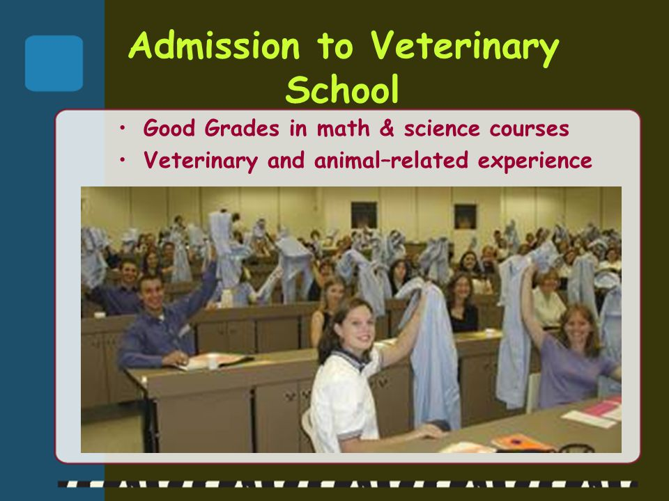 Admission to Veterinary School