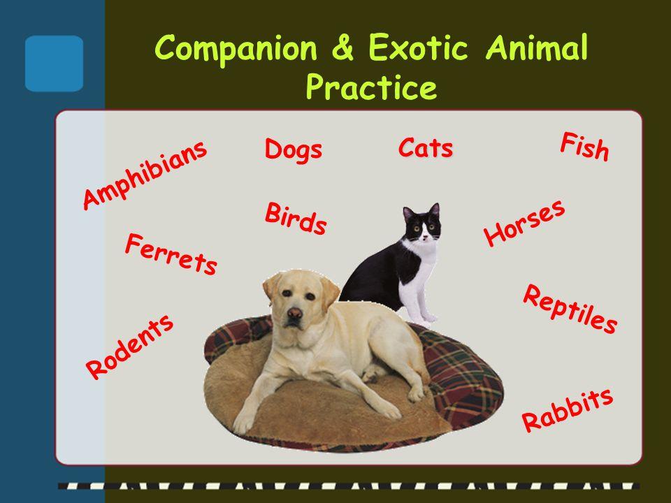 Companion & Exotic Animal Practice