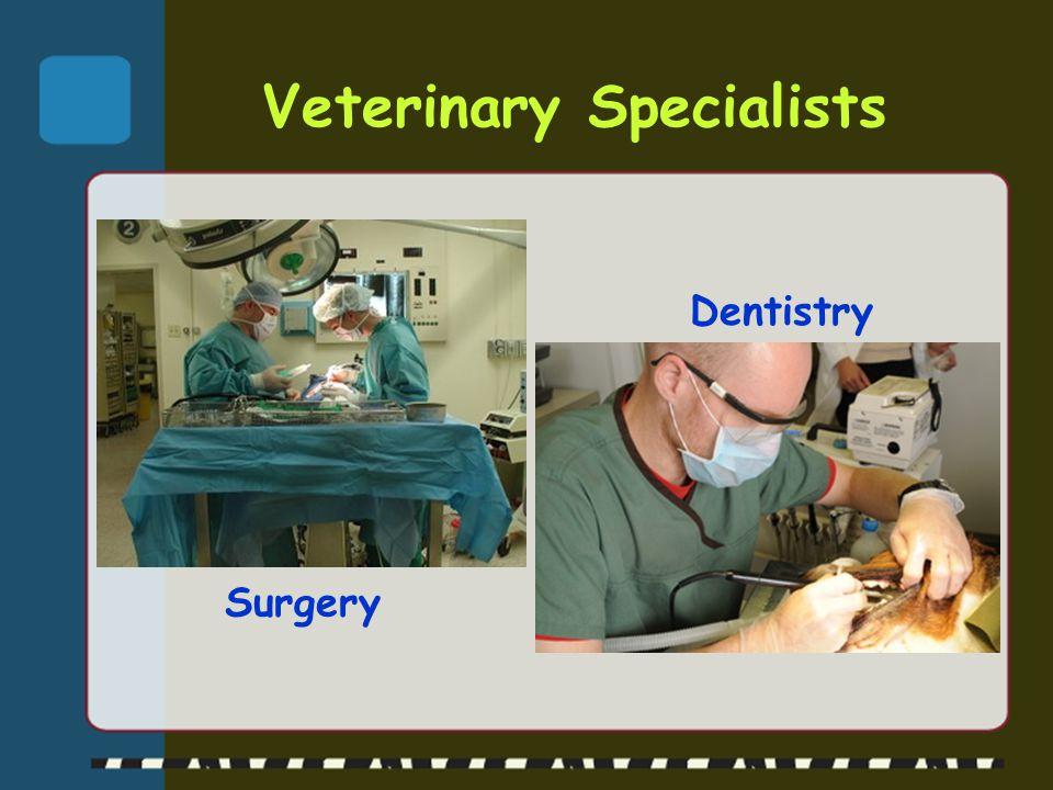 Veterinary Specialists