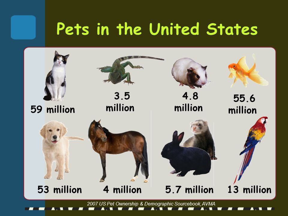 Pets in the United States