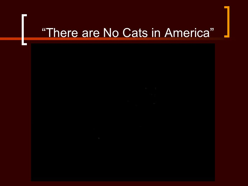 There are No Cats in America