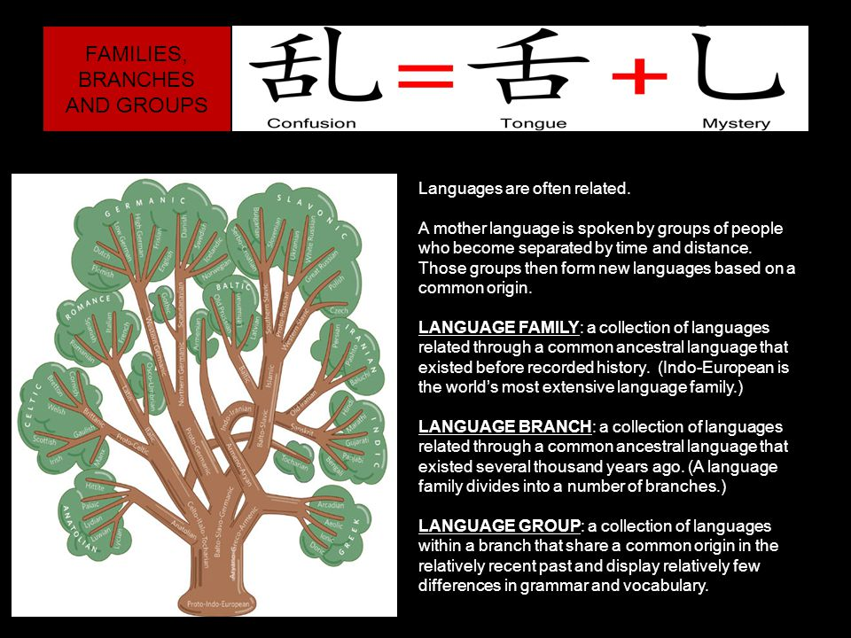 FAMILIES, BRANCHES AND GROUPS Languages are often related.
