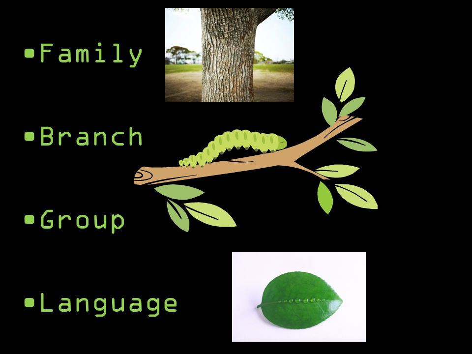 Family Branch Group Language