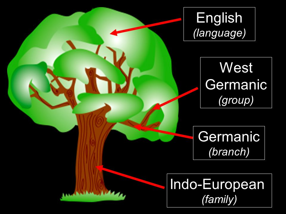 English West Germanic Germanic Indo-European (language) (group)