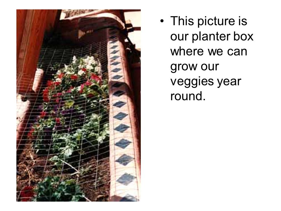 This picture is our planter box where we can grow our veggies year round.