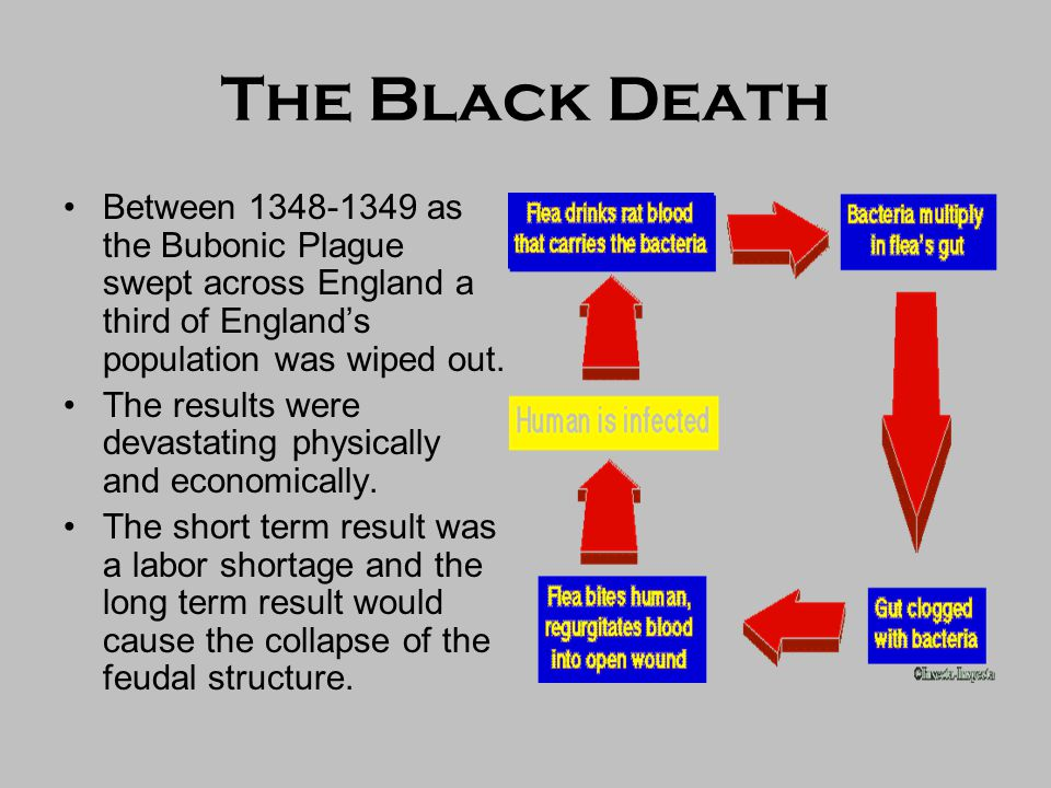 The Black Death Between 1348-1349 as the Bubonic Plague swept across England a third of England's population was wiped out.