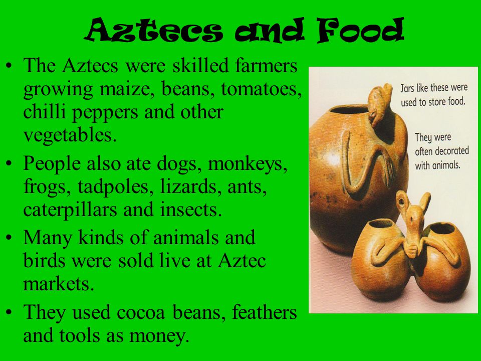 Aztecs and Food The Aztecs were skilled farmers growing maize, beans, tomatoes, chilli peppers and other vegetables.