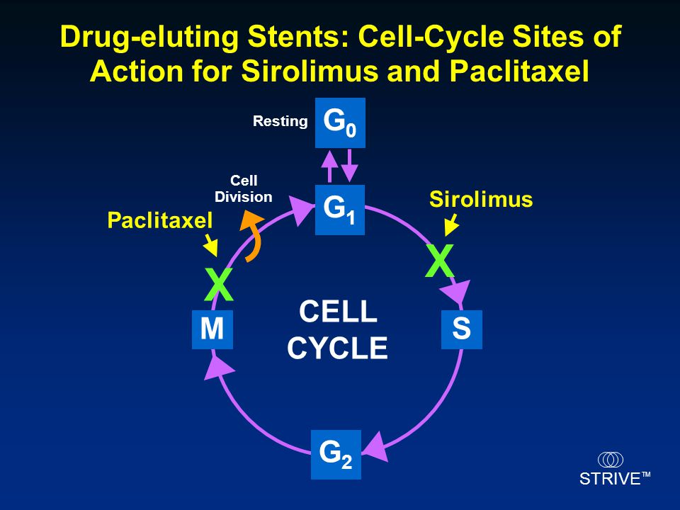 X X Drug-eluting Stents: Cell-Cycle Sites of