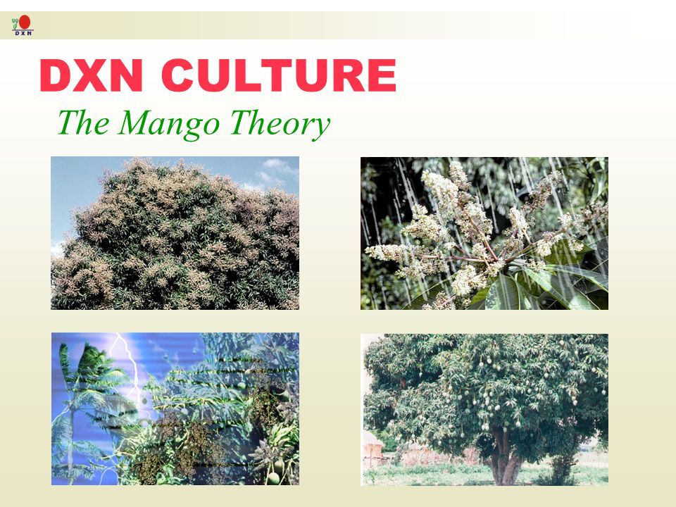 DXN CULTURE The Mango Theory