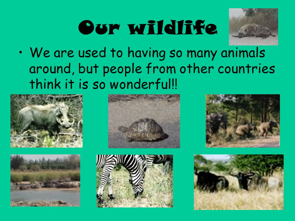 Our wildlife We are used to having so many animals around, but people from other countries think it is so wonderful!!