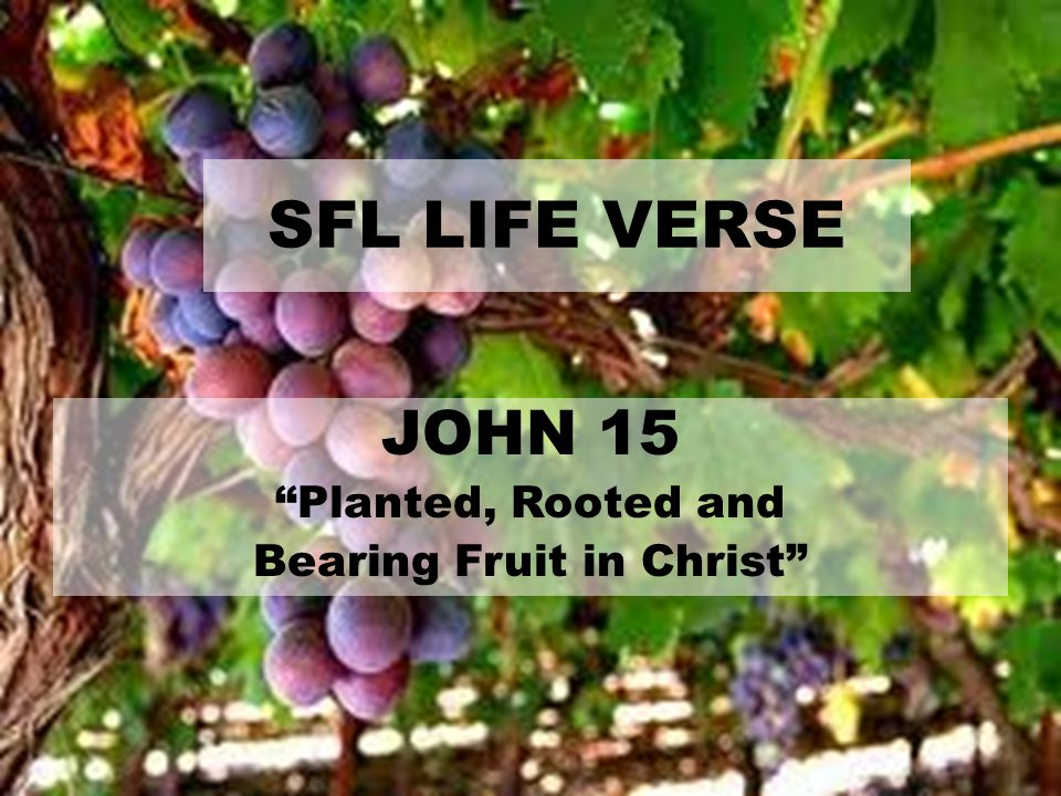 Bearing Fruit in Christ