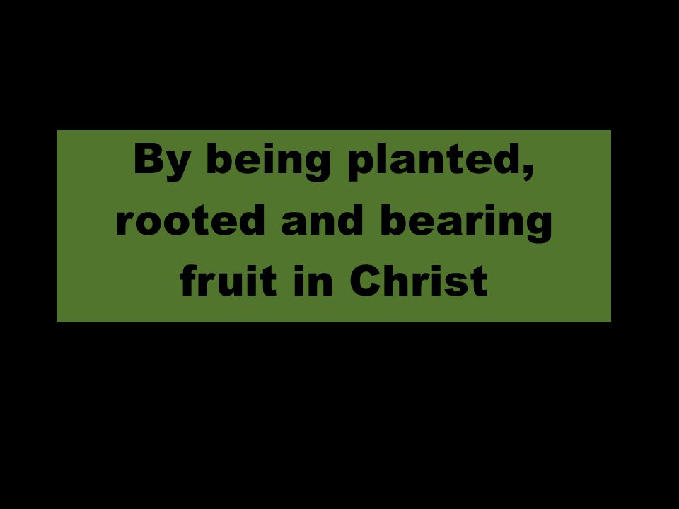 By being planted, rooted and bearing fruit in Christ