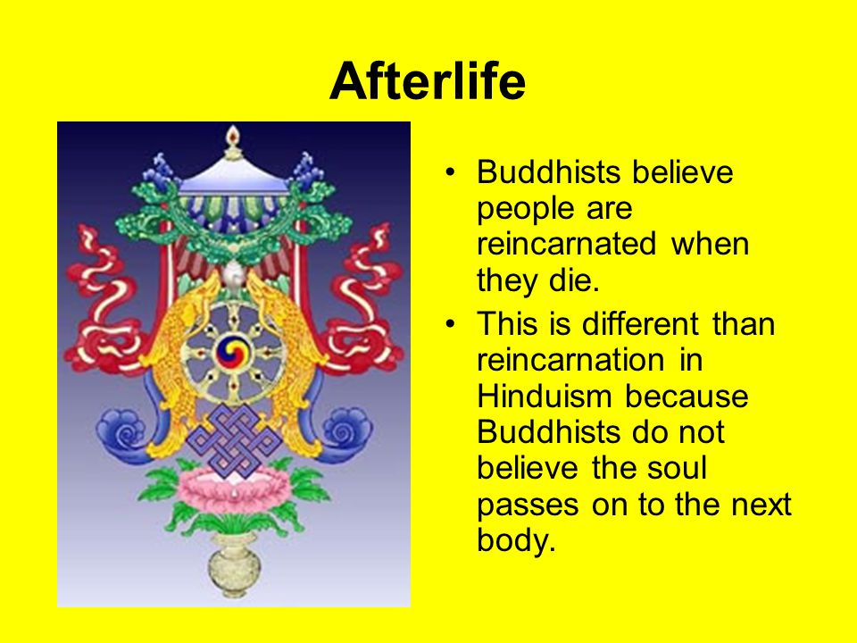 Afterlife Buddhists believe people are reincarnated when they die.