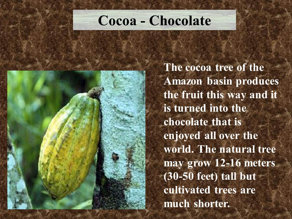 Cocoa - Chocolate
