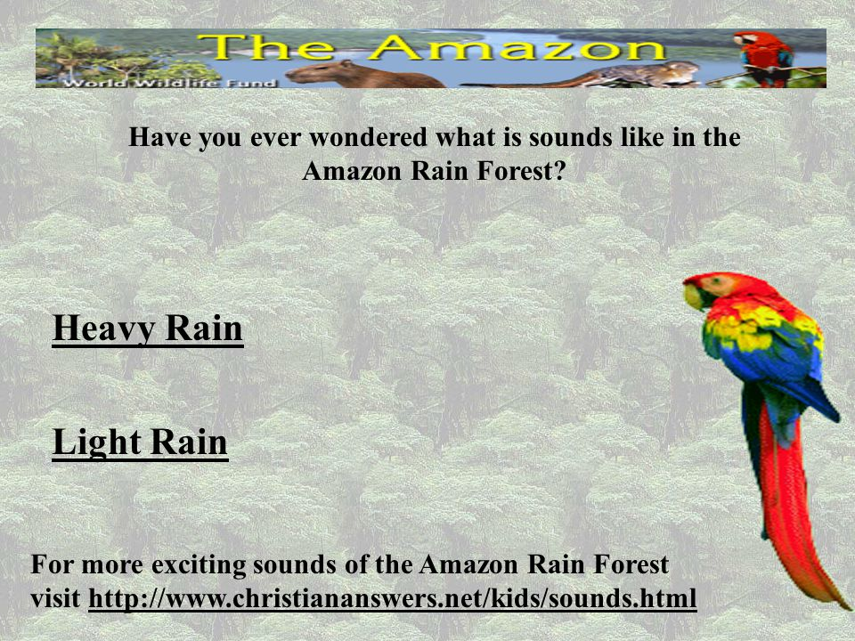 Have you ever wondered what is sounds like in the Amazon Rain Forest