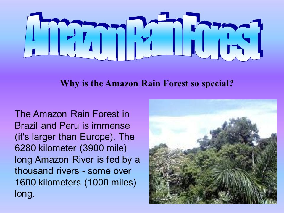 Why is the Amazon Rain Forest so special