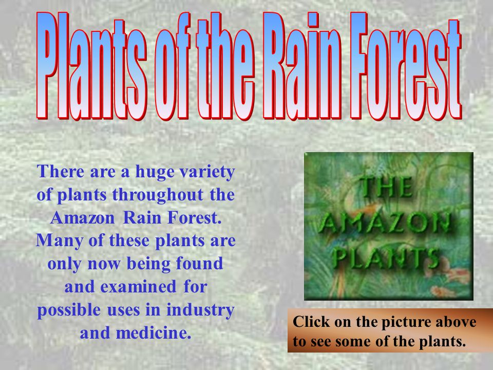 Plants of the Rain Forest