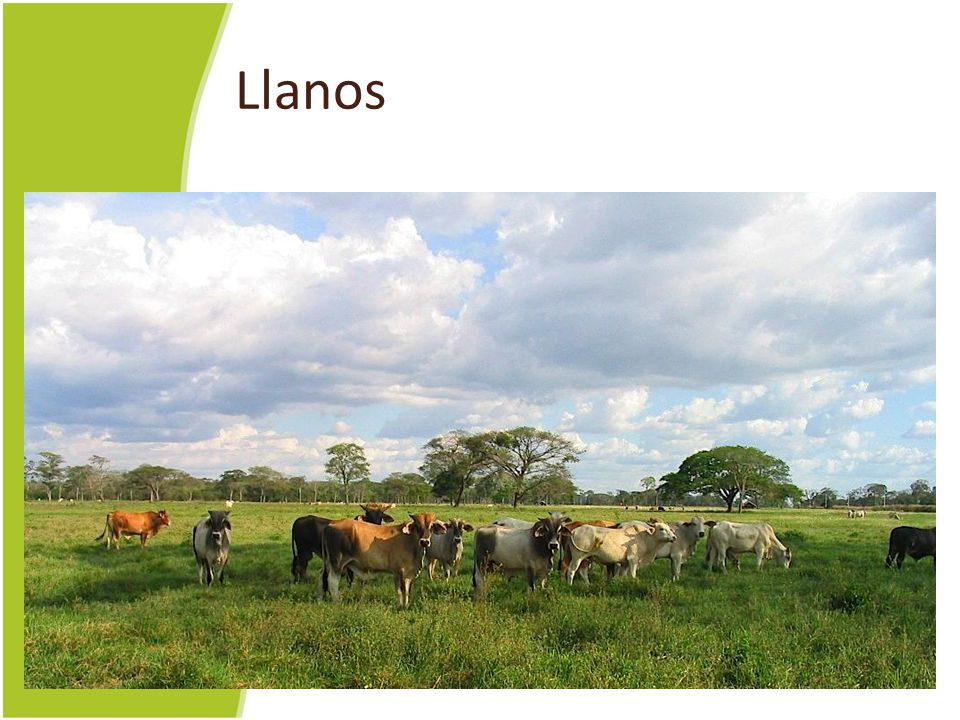 Llanos (LAH-nos) Here, the llanos in Venezuela don't look a lot different than Texas.