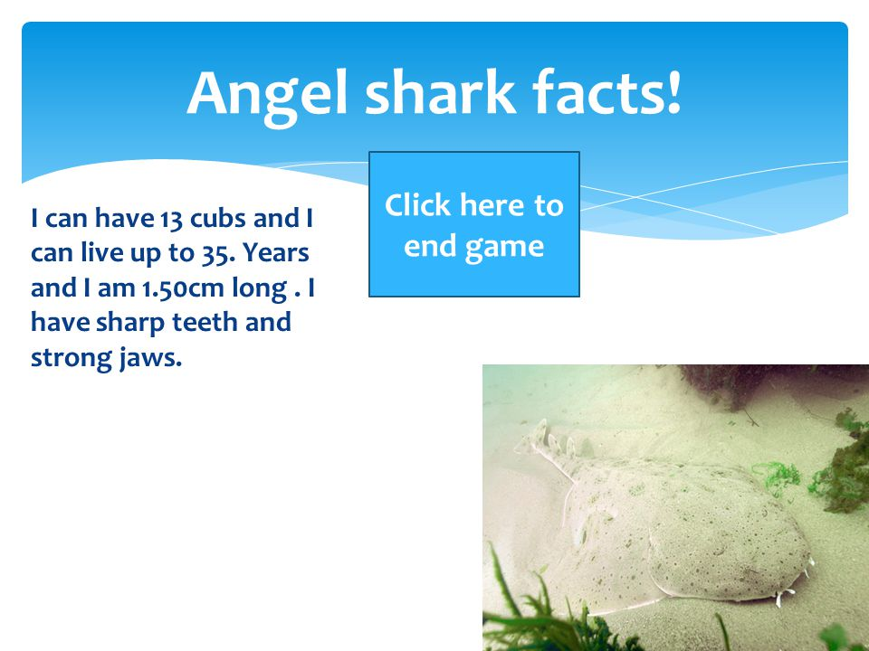 Angel shark facts! Click here to end game